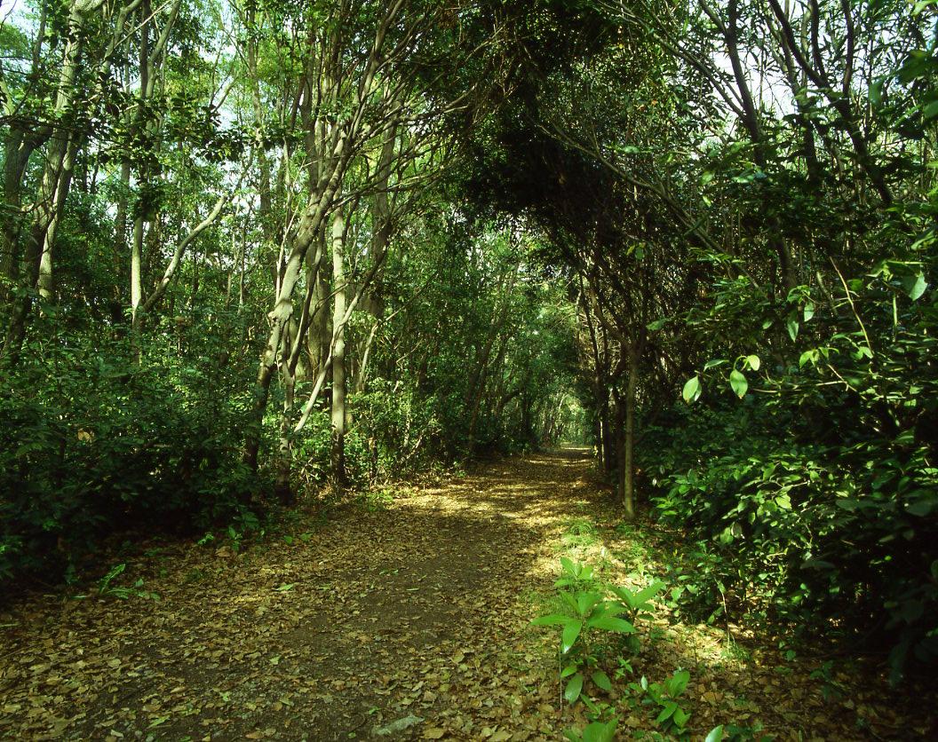 郷土の森の中 (1)