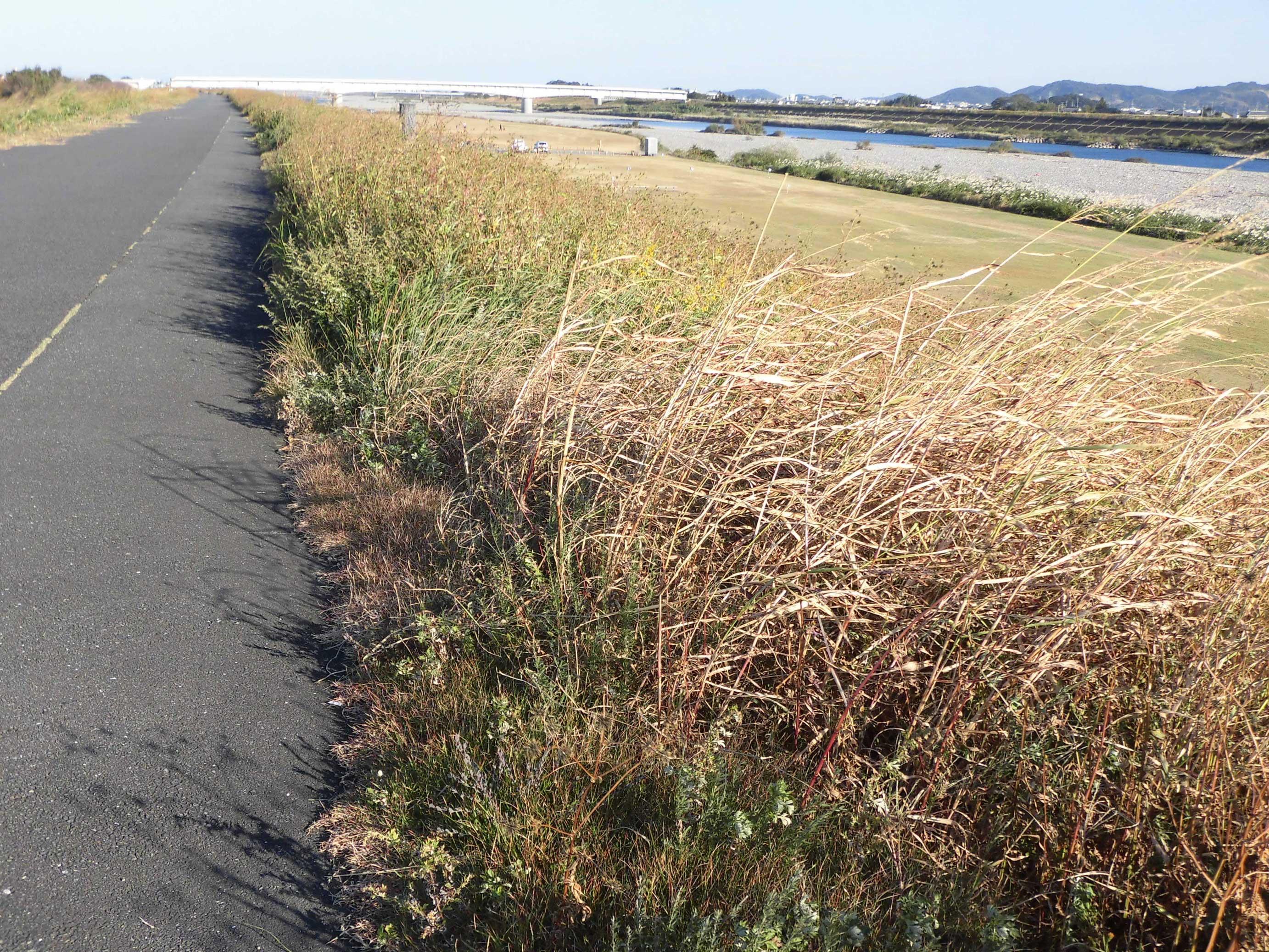 082_05植物廃材として処分される河川の刈草